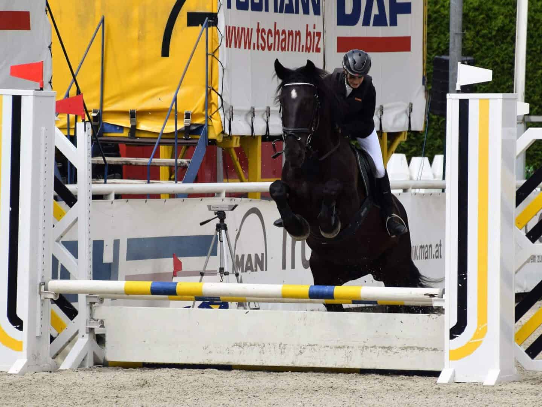 Pferd Wels 30.Mai 2019